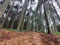 Gotenbayashi Forest